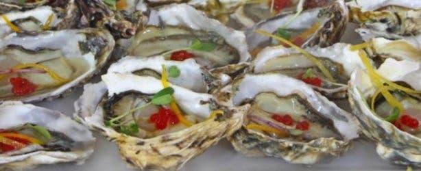 Oysters-Knysna-Oyster-Festival-2012