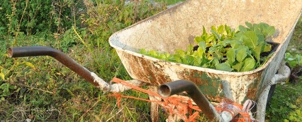 wheelbarrow at garden without electricity in Noordhoek