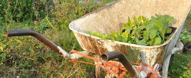 wheelbarrow at garden without electricity in Noordhoek
