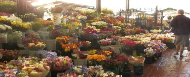 Adderley Flower Market