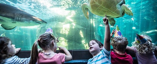 Kids Party Venue Two Oceans Aquarium
