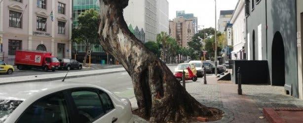 Bree Street_The Tree