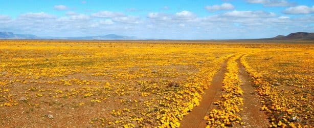 Tankwa Karoo NP Spring Flowers South Africa