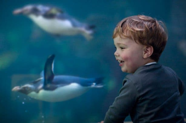 2 oceans aquarium boy and penguin