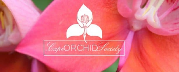 Cape Orchid Society