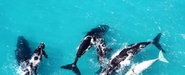 Hermanus Tourism_whales