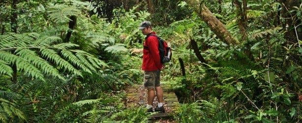 Tsitsikamma hiking