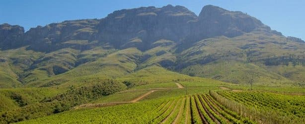 Stellenbosch wineries