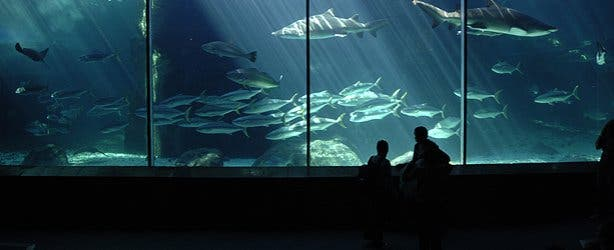 Predator Tank at  2 Oceans Aquarium