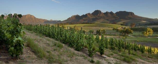 Stellenbosch Winelands from Peter Falke