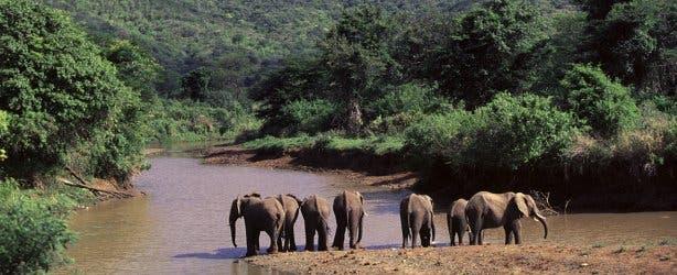 wildpark zuid-afrika