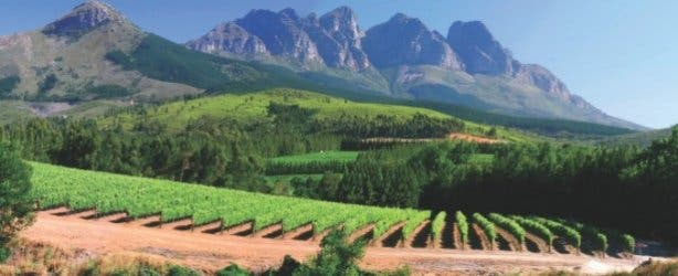AfriCamps_Winelands_Doolhof Camp