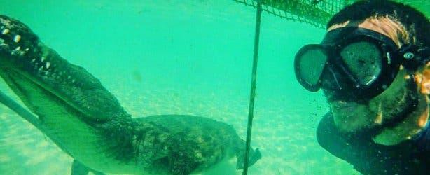 Croc Cage Diving Le Bonheur
