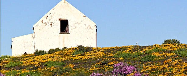 SANParks Carpets of Flowers Tankwa NP