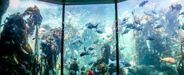 Two Ocean's Aquarium