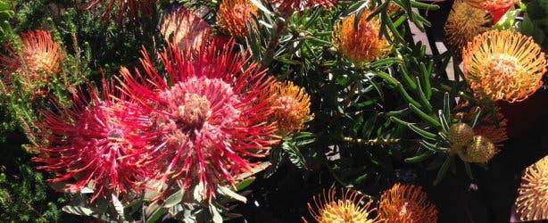 Botanischer Garten Stellenbosch a
