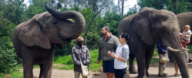 Xplore Tours CT Elephant Sanctuary 3