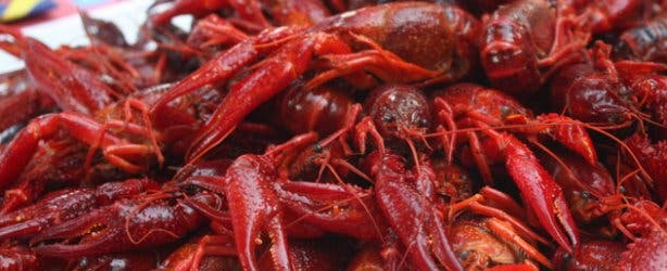 Lamberts Bay Crayfish Festival