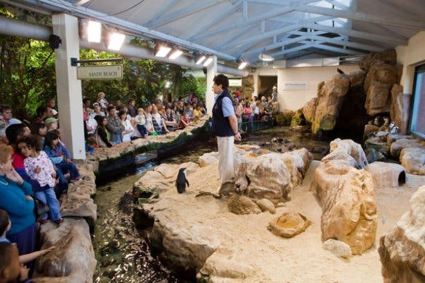 penguin show- two oceans aquarium