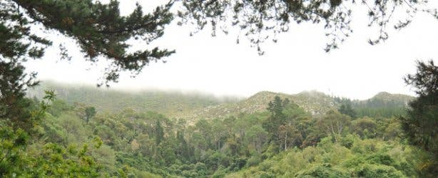 De Hel Hike Constantia | Cape Town Hiking Trails
