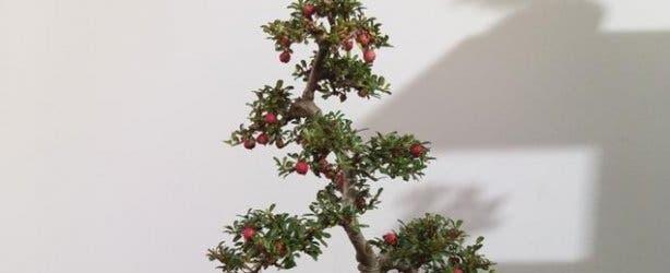 bonsai_plant5