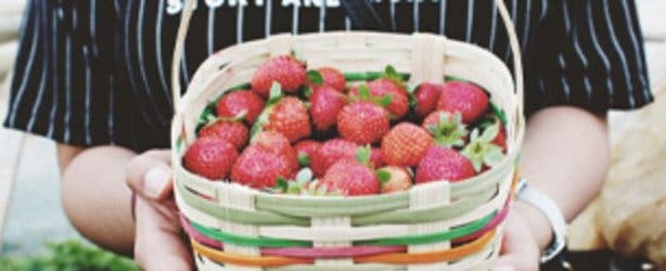 jamestown_strawberry_festival