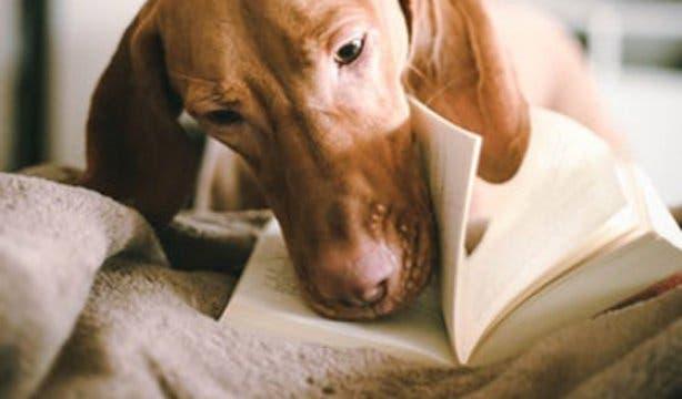 SPCA Book Sale 2