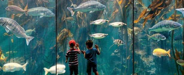 Two Oceans Aquarium Birthday Free2