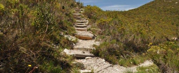 Fernkloof hike   Forrest   Hermanus