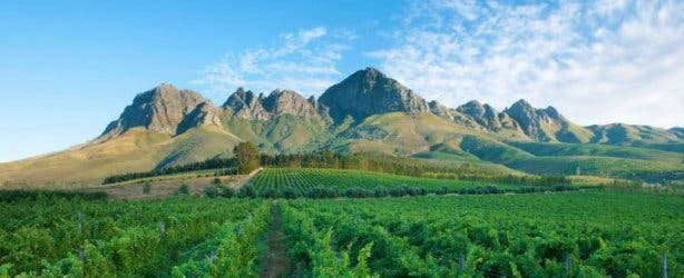 cape_town_experiences_lourensford
