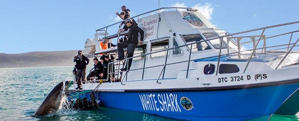 WSDC Shark and Boat 2