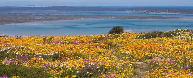 Bloemenseizoen Kaapstad Westkust