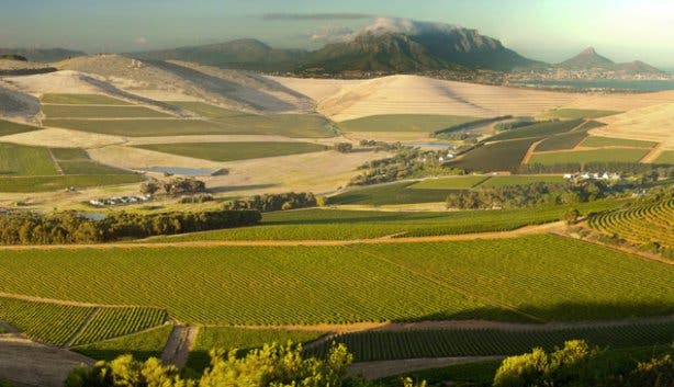 Durbanville Wine Region Western Cape