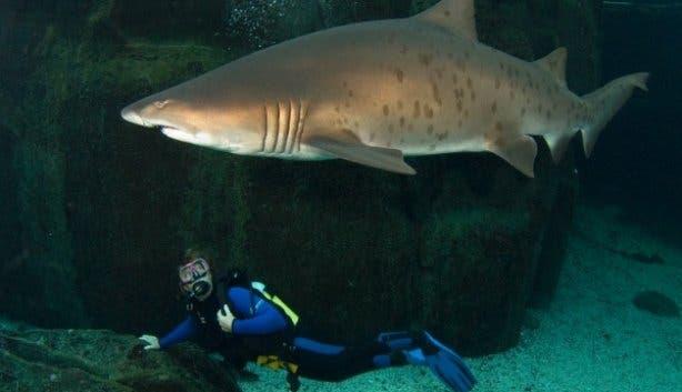 Two_Oceans_Aquarium_Dive_School_Cape_Town_shark_tank