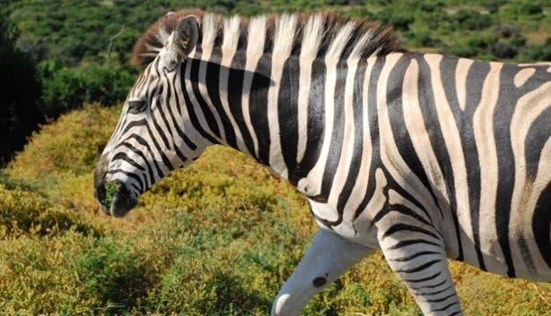 Addo Elephant Park | Safari South Africa