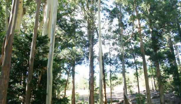 Easy hikes Cape town | Tokai forest hike cape town