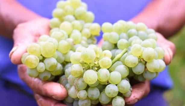 platters_sauvignon_blanc_steenberg_wines