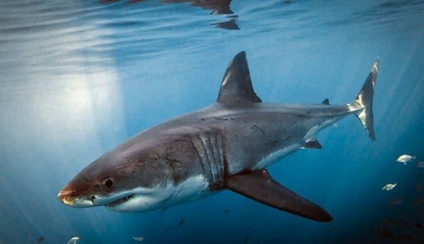 WSDC Shark 3