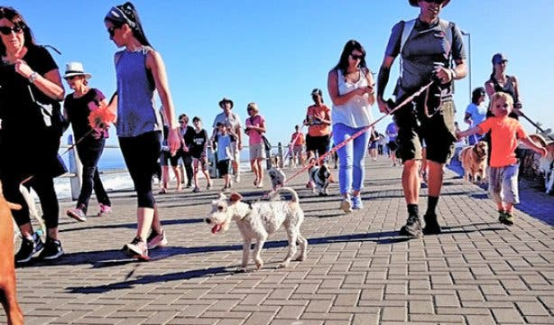 Paws on the Promenade walkers