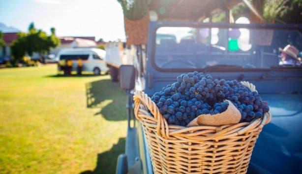 Stellenbosch Wine Festival 4