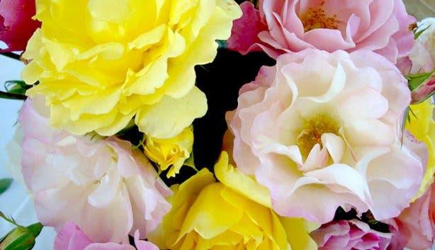 Greyton Rose Fair