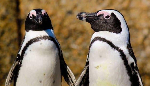 Penguin_Festival_2