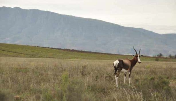 Swellendam attractions | Western Cape countryside