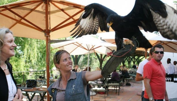 Spier Eagle Encounters Bird Rehabilitation Centre