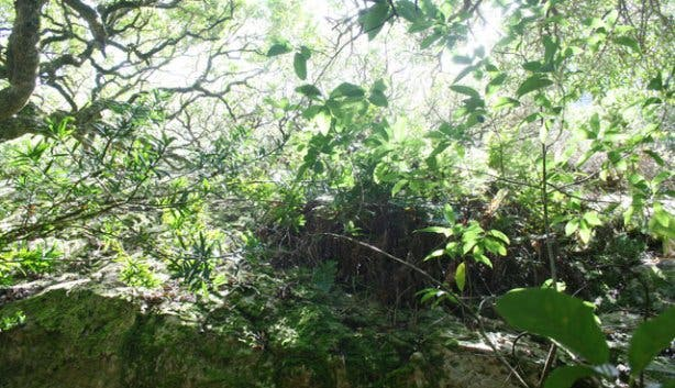 Spes Bona Forest 9