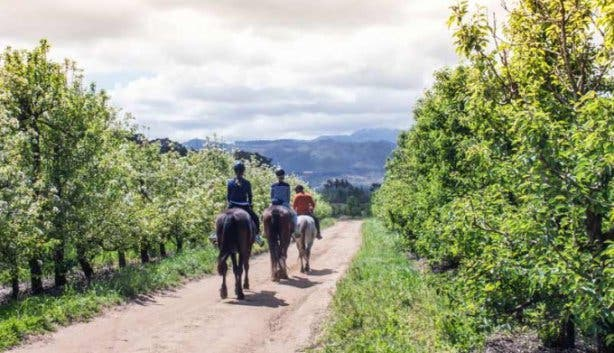 Day Tours_HorseRiding