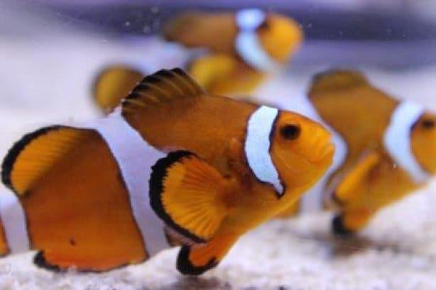 Two Oceans Aquarium