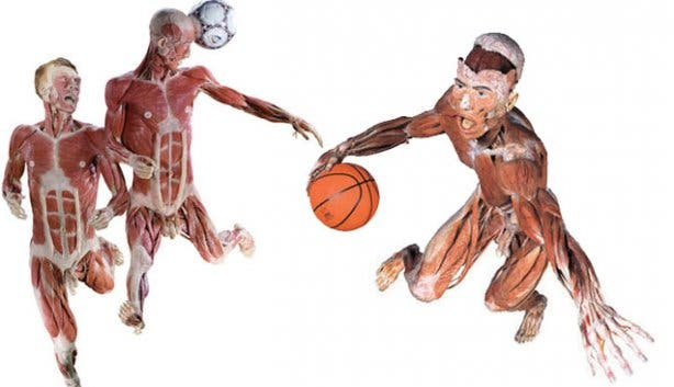 body worlds sports