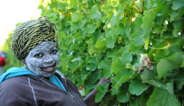 Pure Senses Trading Wine