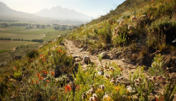 La Motte wine estate hiking route